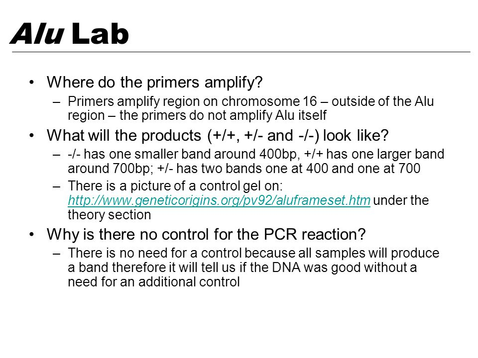 Where do the primers amplify? –Primers amplify region on chromosome 16 – outside of the Alu region – the primers do not amplify Alu itself What will t