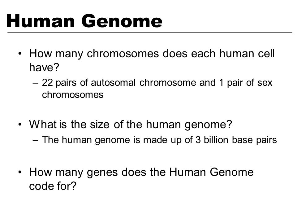 How many chromosomes does each human cell have? –22 pairs of autosomal chromosome and 1 pair of sex chromosomes What is the size of the human genome?