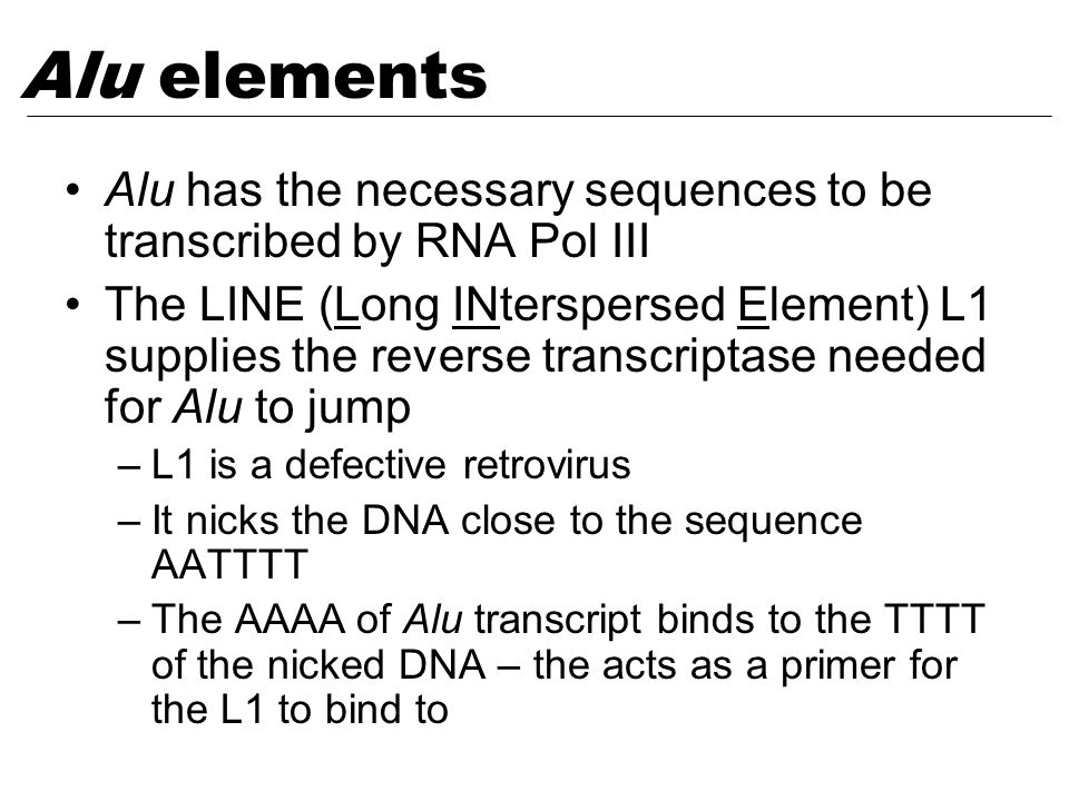 Alu has the necessary sequences to be transcribed by RNA Pol III The LINE (Long INterspersed Element) L1 supplies the reverse transcriptase needed for Alu to jump –L1 is a defective retrovirus –It nicks the DNA close to the sequence AATTTT –The AAAA of Alu transcript binds to the TTTT of the nicked DNA – the acts as a primer for the L1 to bind to Alu elements