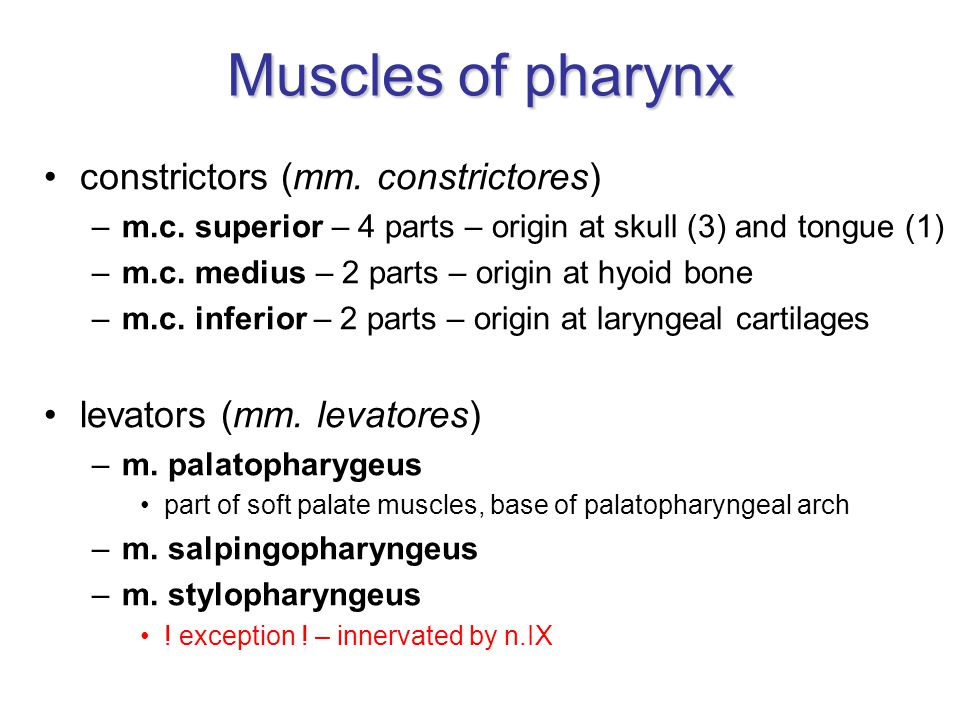Muscles of pharynx constrictors (mm. constrictores) –m.c. superior – 4 parts – origin at skull (3) and tongue (1) –m.c. medius – 2 parts – origin at h