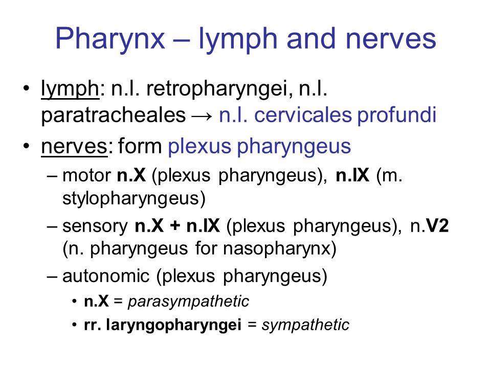 Pharynx – lymph and nerves lymph: n.l. retropharyngei, n.l. paratracheales → n.l. cervicales profundi nerves: form plexus pharyngeus –motor n.X (plexu