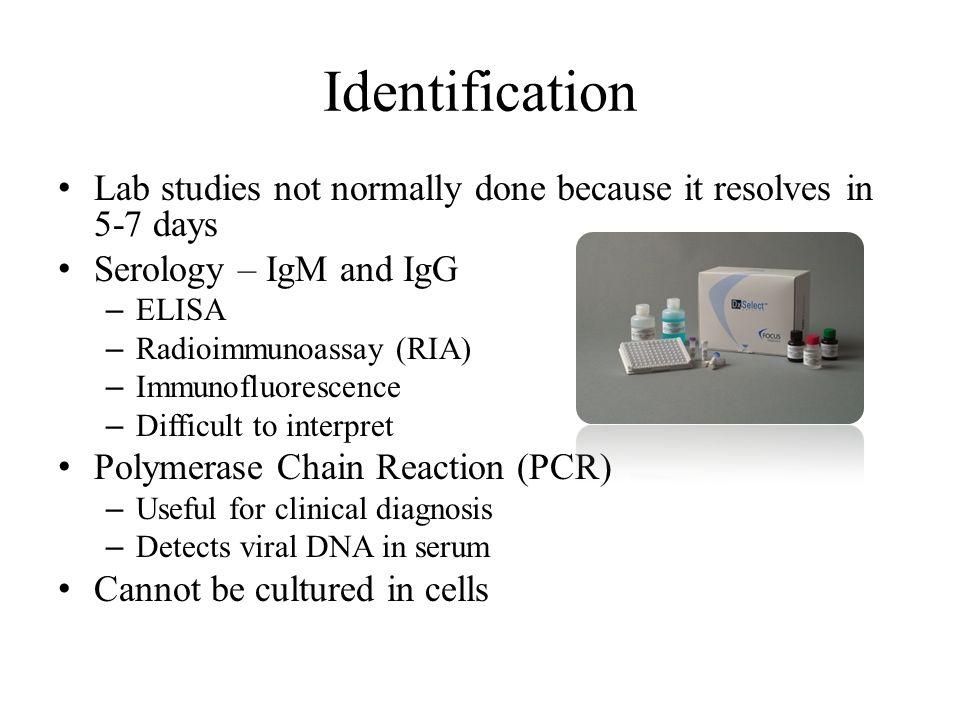 Identification Lab studies not normally done because it resolves in 5-7 days Serology – IgM and IgG – ELISA – Radioimmunoassay (RIA) – Immunofluoresce