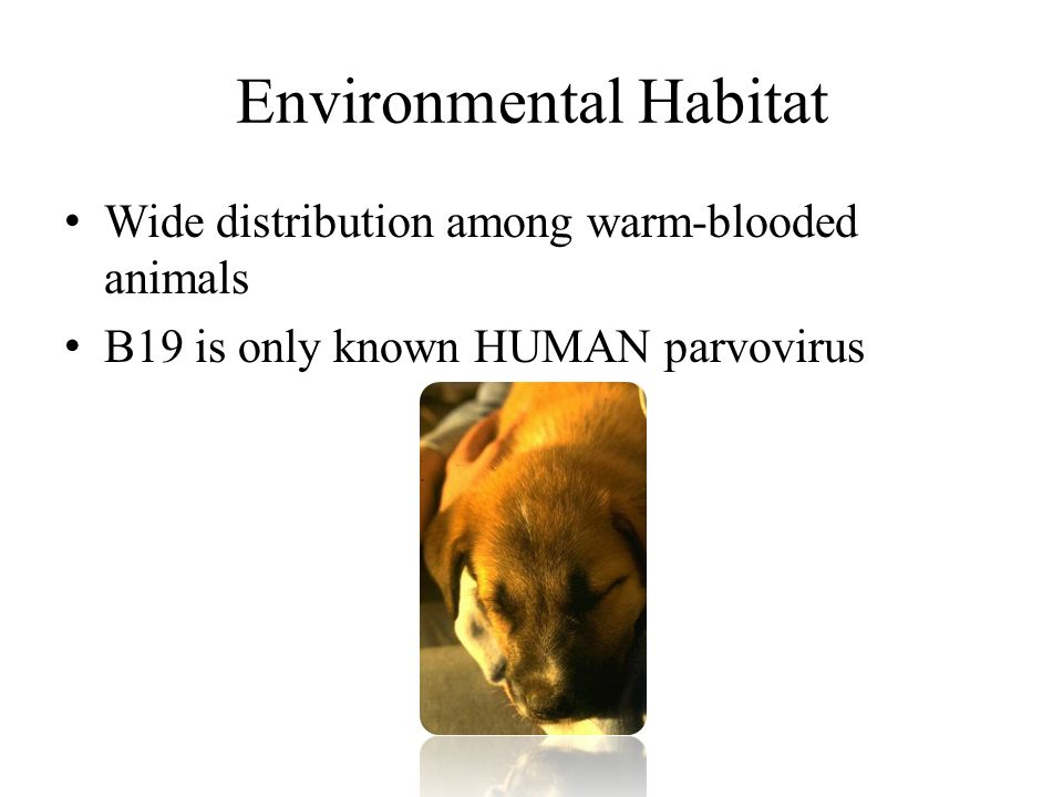 Environmental Habitat Wide distribution among warm-blooded animals B19 is only known HUMAN parvovirus