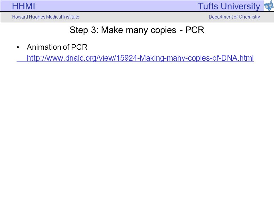 HHMI Howard Hughes Medical Institute Tufts University Department of Chemistry Step 3: Make many copies - PCR Animation of PCR http://www.dnalc.org/view/15924-Making-many-copies-of-DNA.html