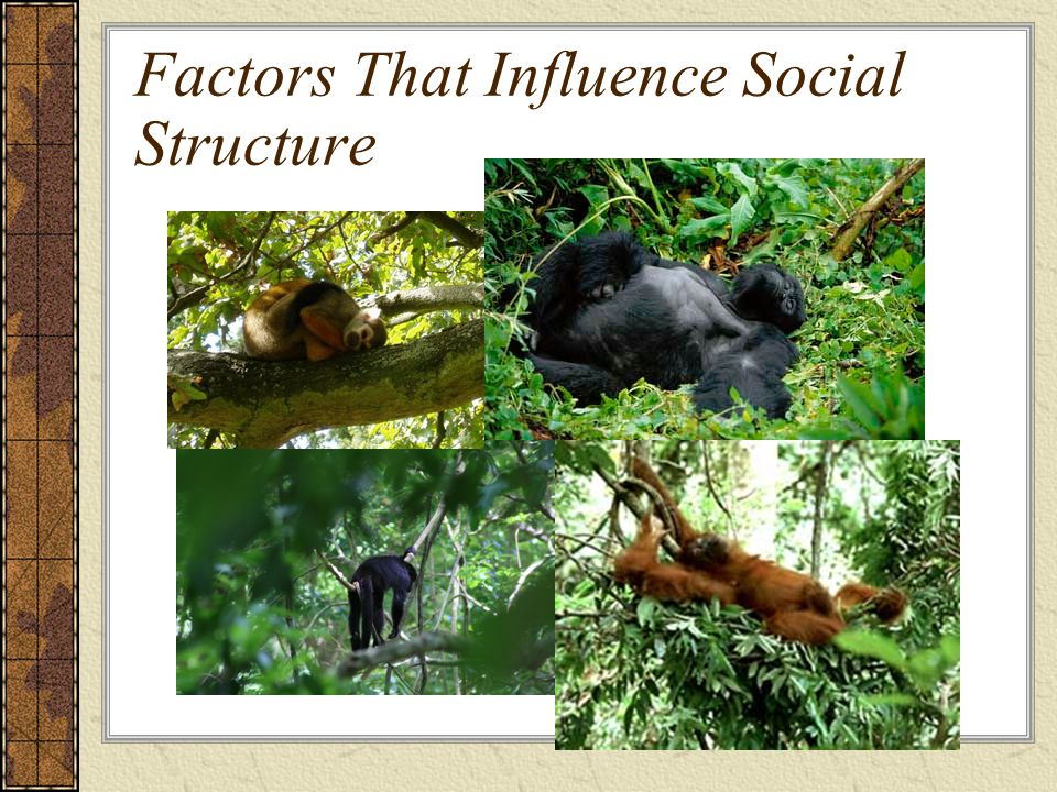 Factors That Influence Social Structure