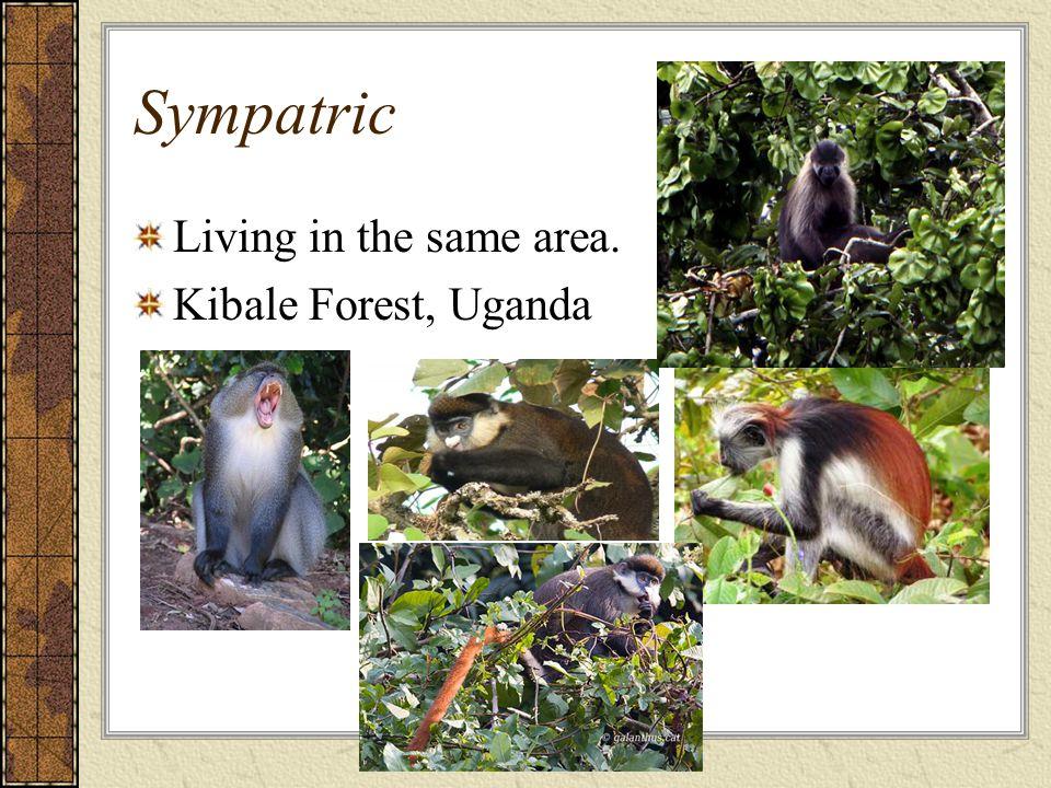 Sympatric Living in the same area. Kibale Forest, Uganda