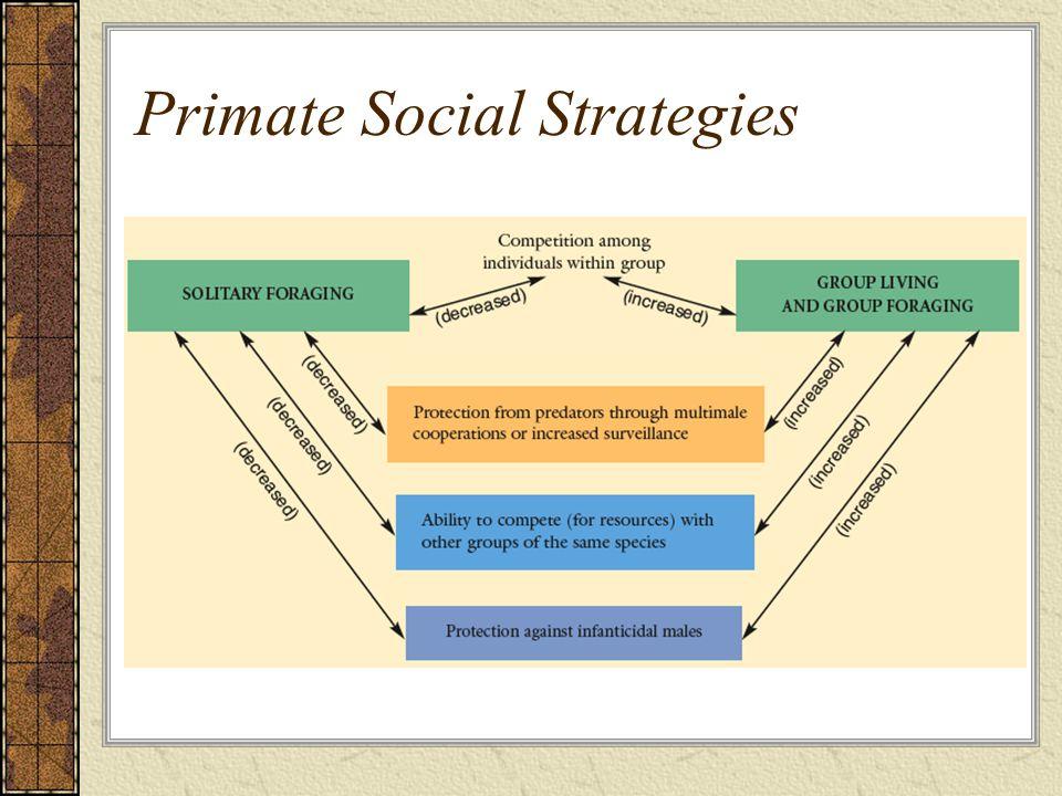 Primate Social Strategies