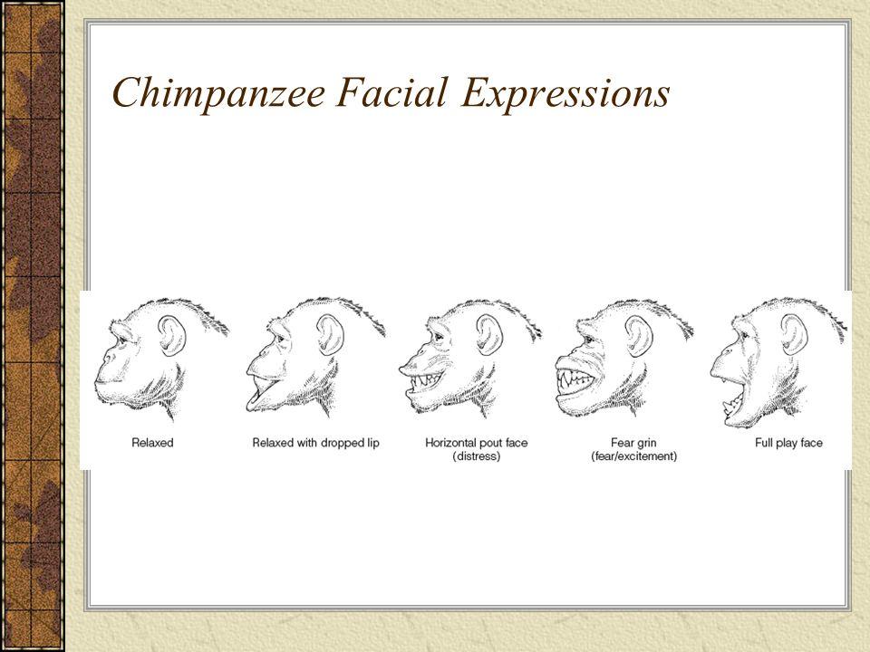 Chimpanzee Facial Expressions