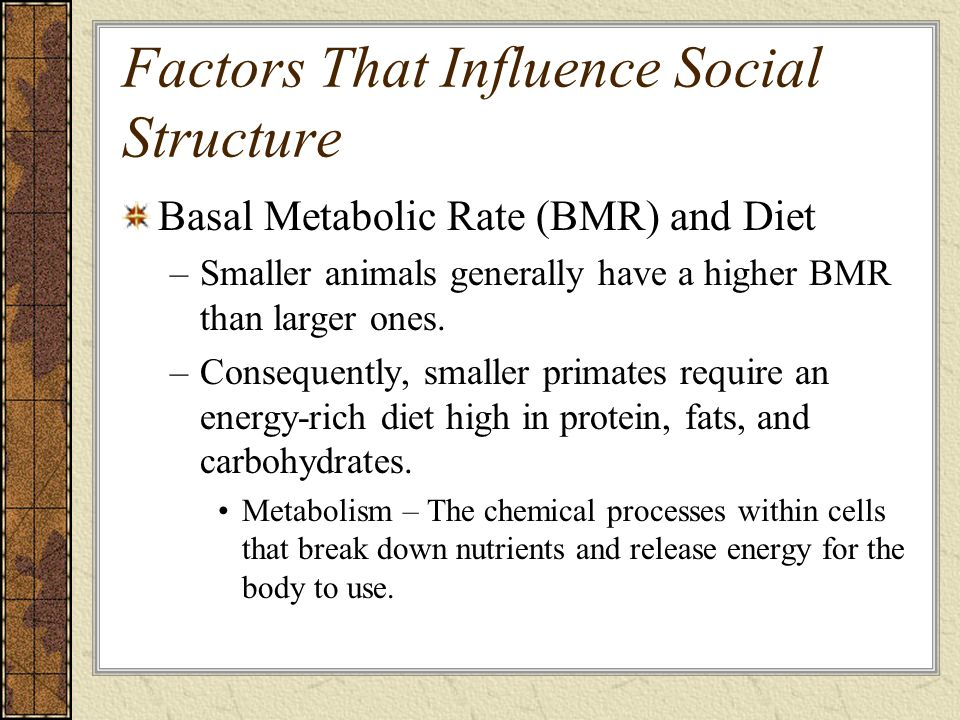 Factors That Influence Social Structure Basal Metabolic Rate (BMR) and Diet –Smaller animals generally have a higher BMR than larger ones.
