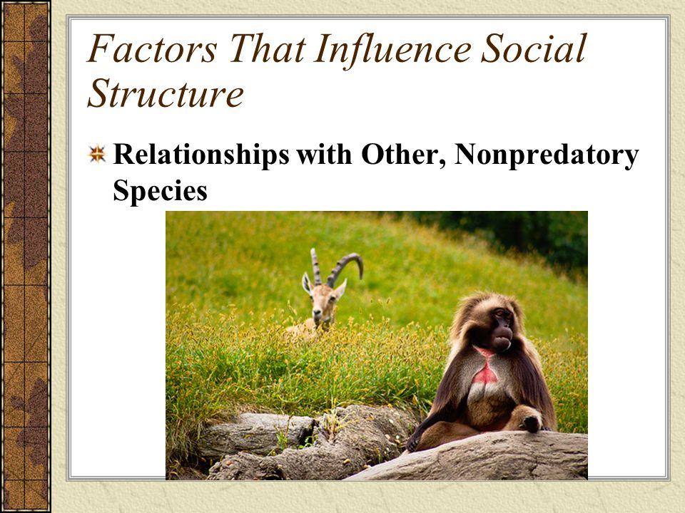 Factors That Influence Social Structure Relationships with Other, Nonpredatory Species