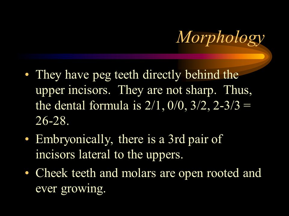 Morphology They have peg teeth directly behind the upper incisors.
