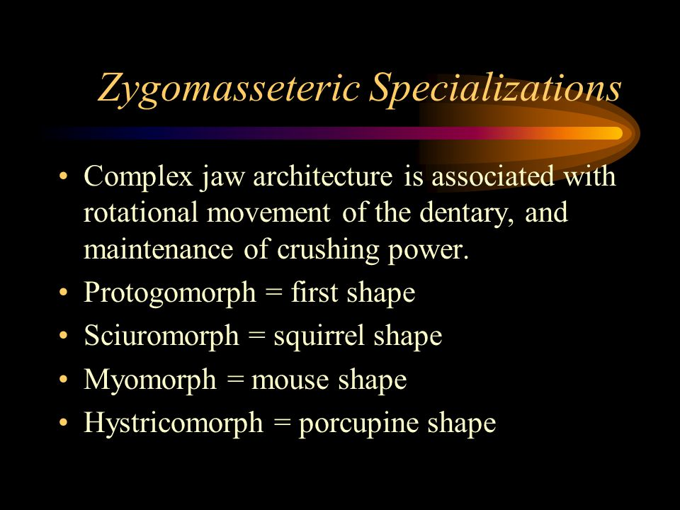 Zygomasseteric Specializations Complex jaw architecture is associated with rotational movement of the dentary, and maintenance of crushing power.