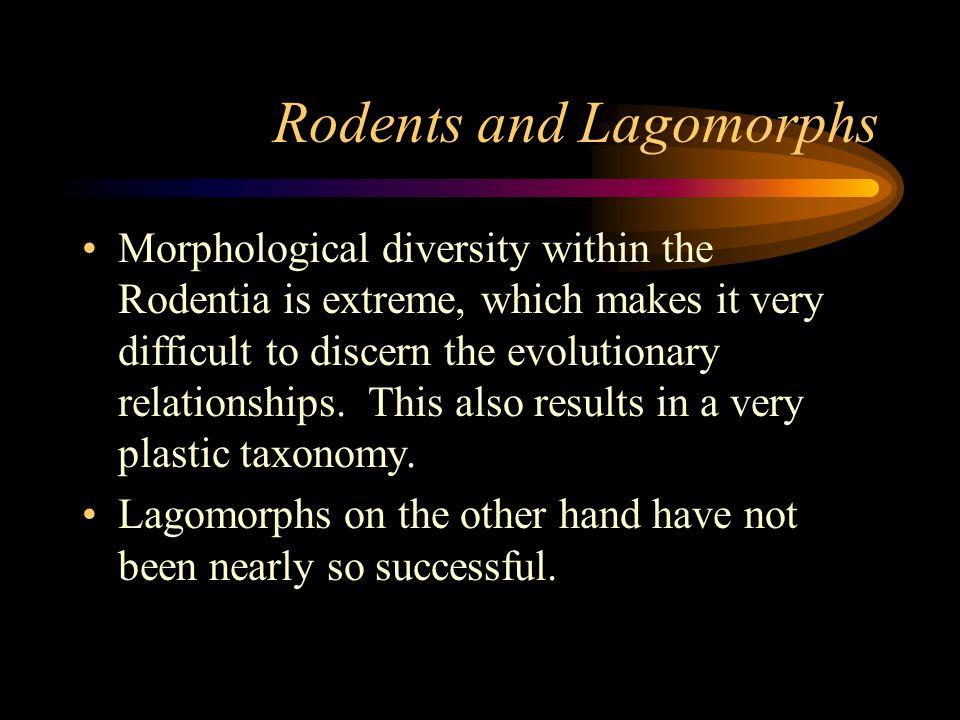 Sciuromorpha Families: –Aplodontidae –Sciuridae –Geomyidae –Heteromyidae –Castoridae –Anomaluridae –Pedetidae