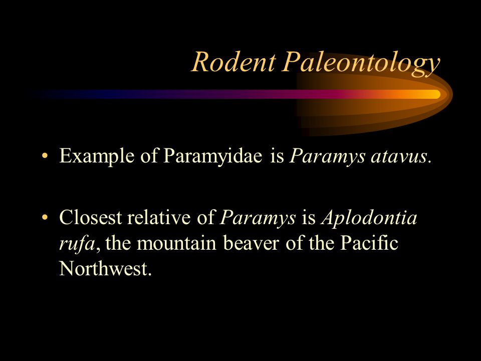 Rodent Paleontology Example of Paramyidae is Paramys atavus.
