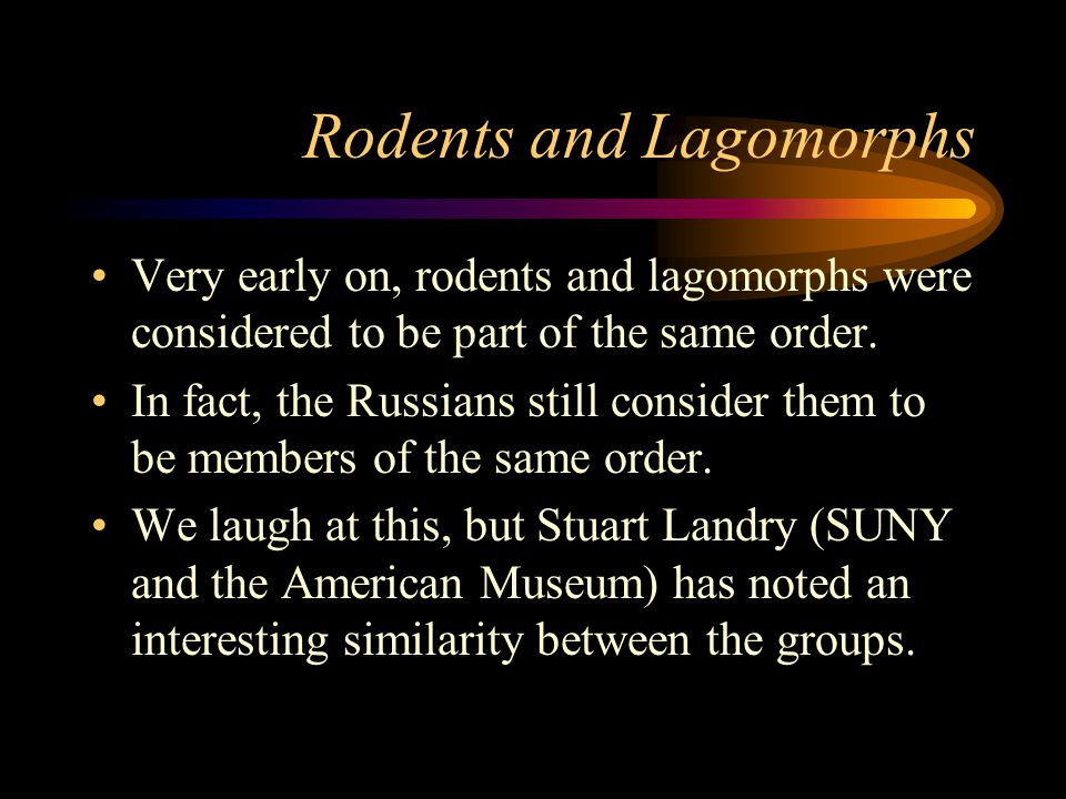 Rodents and Lagomorphs Very early on, rodents and lagomorphs were considered to be part of the same order.