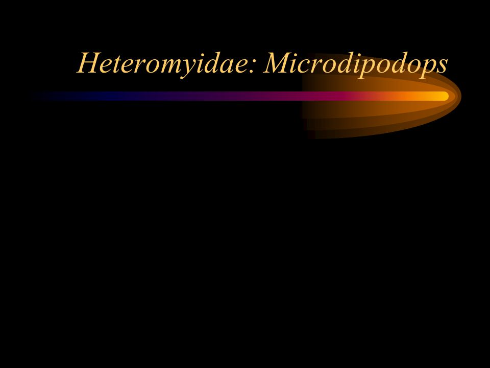 Heteromyidae: Microdipodops