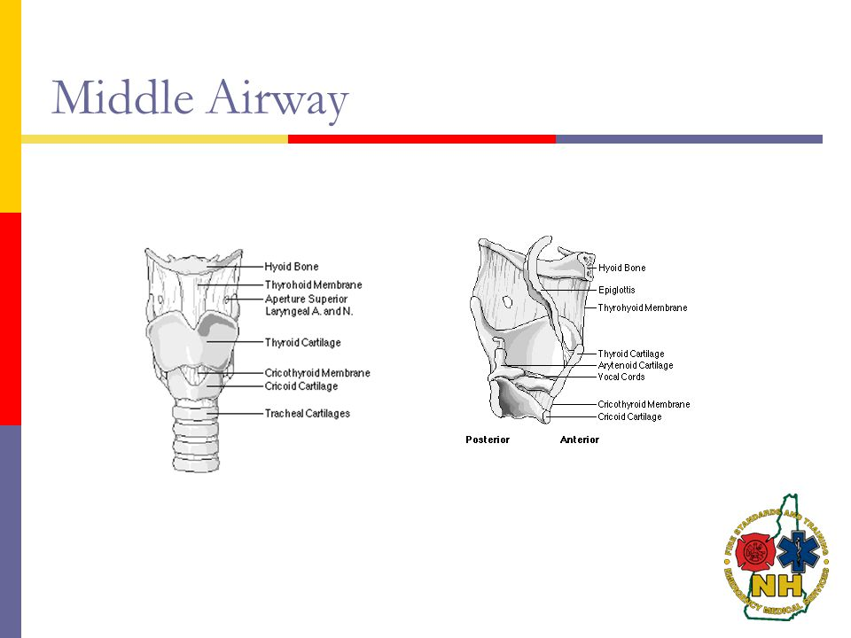 Middle Airway