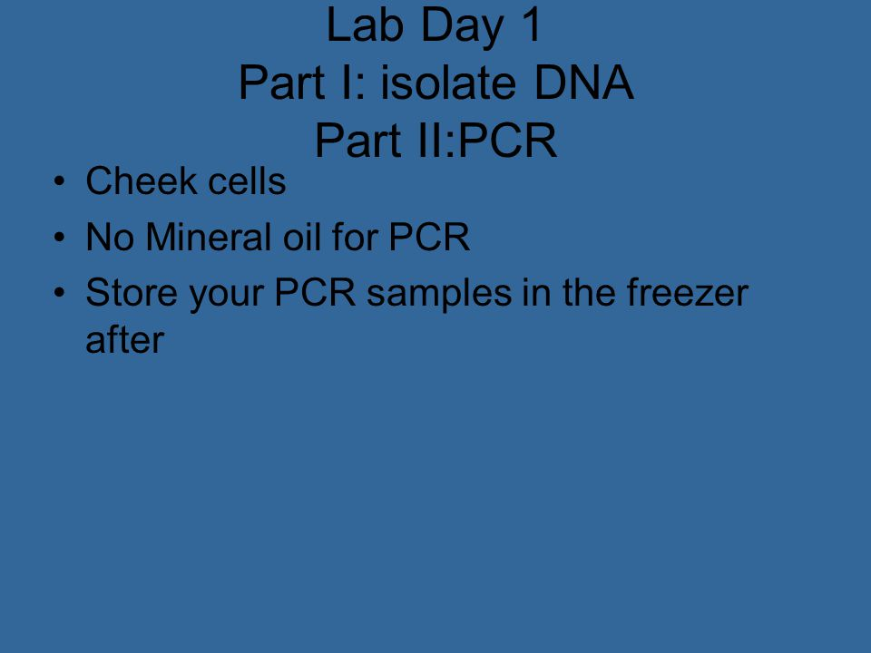 Lab Day 1 Part I: isolate DNA Part II:PCR Cheek cells No Mineral oil for PCR Store your PCR samples in the freezer after