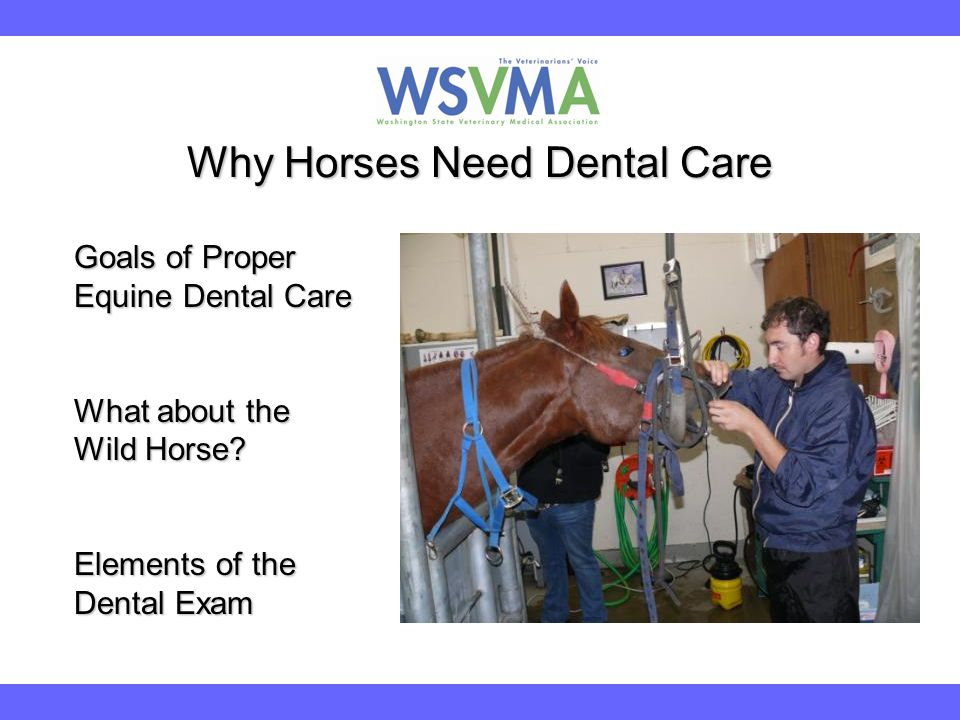 Why Horses Need Dental Care Goals of Proper Equine Dental Care What about the Wild Horse? Elements of the Dental Exam
