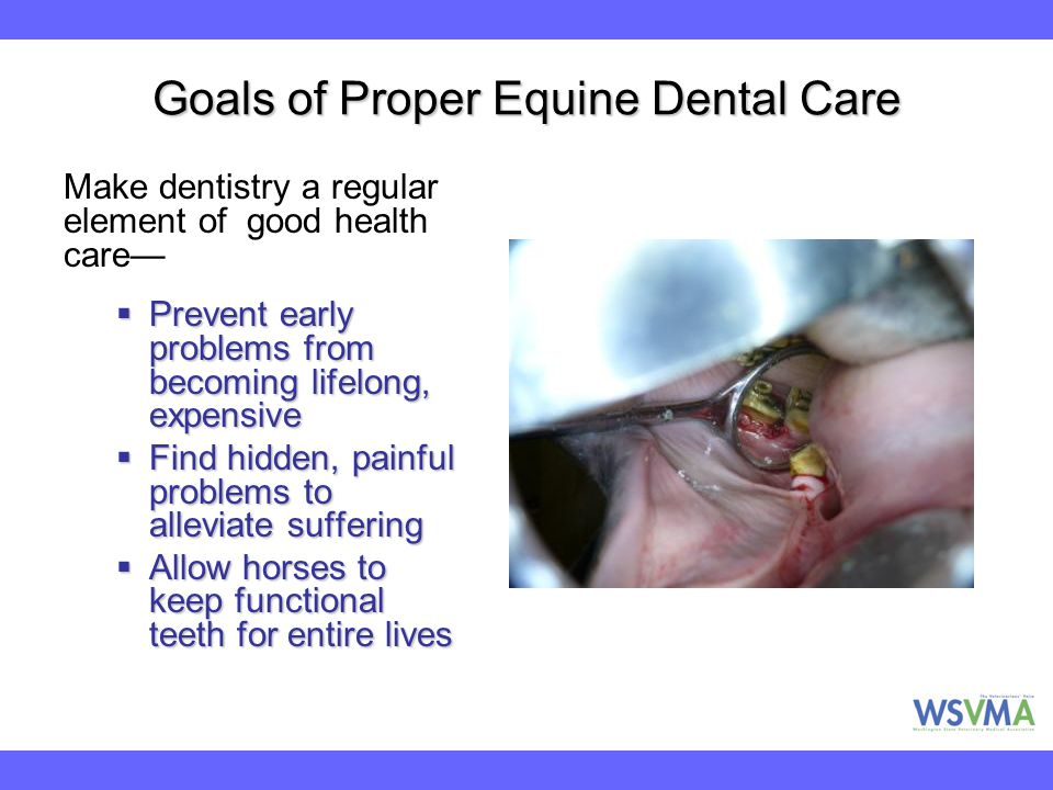 Goals of Proper Equine Dental Care Make dentistry a regular element of good health care—  Prevent early problems from becoming lifelong, expensive 