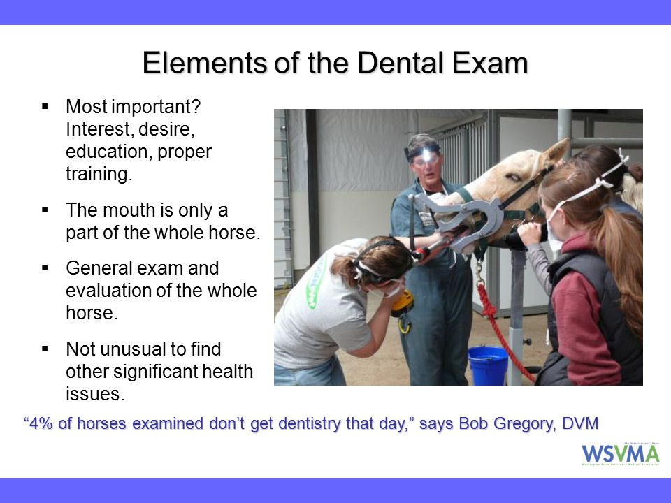 Elements of the Dental Exam  Most important? Interest, desire, education, proper training.  The mouth is only a part of the whole horse.  General e