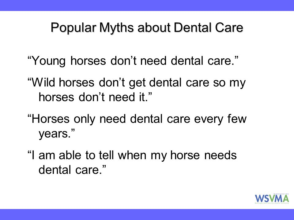 """Popular Myths about Dental Care """"Young horses don't need dental care."""" """"Wild horses don't get dental care so my horses don't need it."""" """"Horses only ne"""