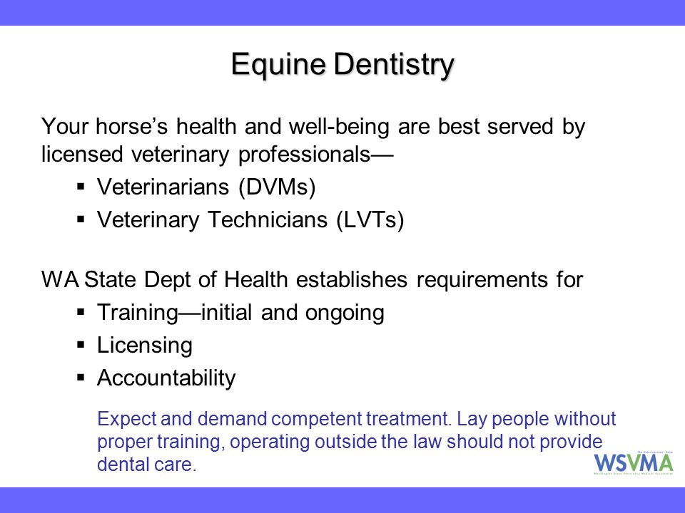 Equine Dentistry Your horse's health and well-being are best served by licensed veterinary professionals—  Veterinarians (DVMs)  Veterinary Technici