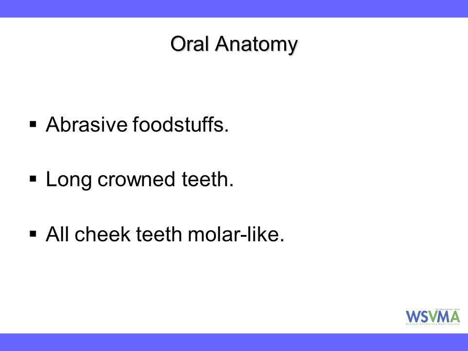 Oral Anatomy  Abrasive foodstuffs.  Long crowned teeth.  All cheek teeth molar-like.