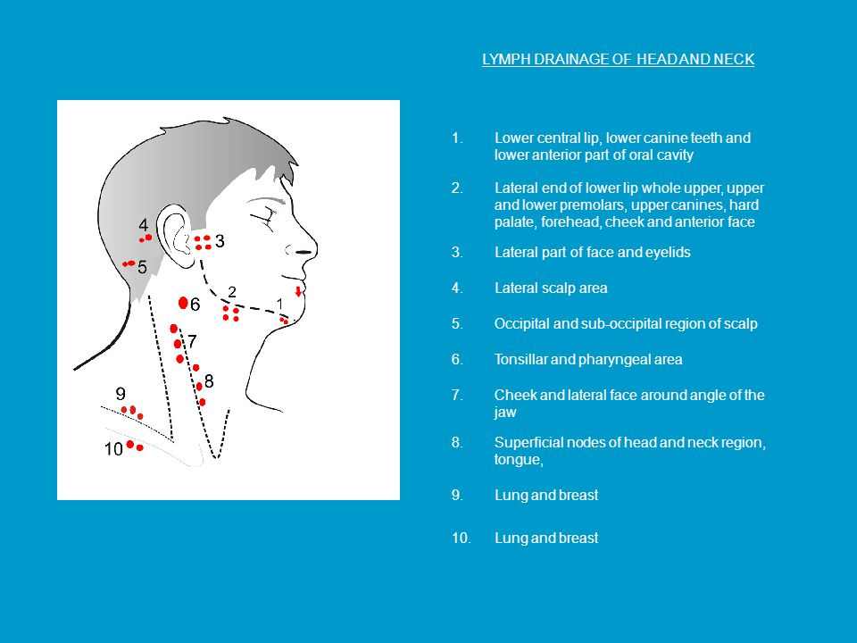 LYMPH DRAINAGE OF HEAD AND NECK 1.Lower central lip, lower canine teeth and lower anterior part of oral cavity 2.Lateral end of lower lip whole upper, upper and lower premolars, upper canines, hard palate, forehead, cheek and anterior face 8.Superficial nodes of head and neck region, tongue, 3.Lateral part of face and eyelids 4.Lateral scalp area 9.Lung and breast 5.Occipital and sub-occipital region of scalp 6.Tonsillar and pharyngeal area 7.Cheek and lateral face around angle of the jaw 10.Lung and breast