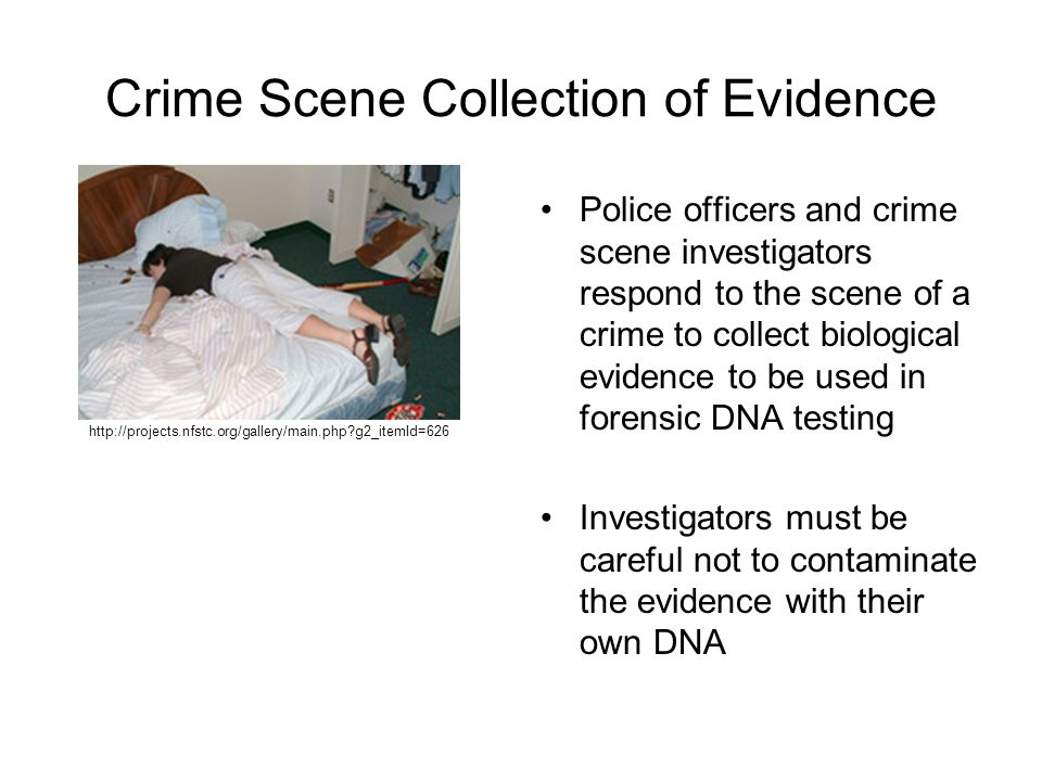 Crime Scene Collection of Evidence Police officers and crime scene investigators respond to the scene of a crime to collect biological evidence to be used in forensic DNA testing Investigators must be careful not to contaminate the evidence with their own DNA http://projects.nfstc.org/gallery/main.php g2_itemId=626