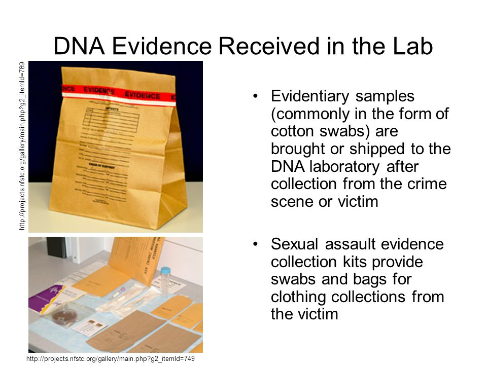DNA Evidence Received in the Lab Evidentiary samples (commonly in the form of cotton swabs) are brought or shipped to the DNA laboratory after collection from the crime scene or victim Sexual assault evidence collection kits provide swabs and bags for clothing collections from the victim http://projects.nfstc.org/gallery/main.php g2_itemId=789 http://projects.nfstc.org/gallery/main.php g2_itemId=749