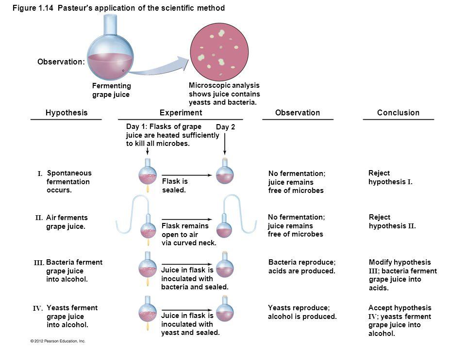 Figure 1.14 Pasteur's application of the scientific method Observation: Hypothesis Experiment Observation Conclusion Fermenting grape juice Microscopi