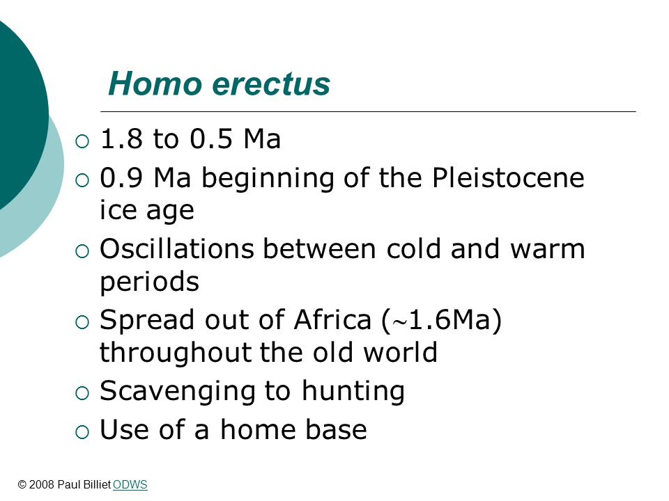 Homo erectus  1.8 to 0.5 Ma  0.9 Ma beginning of the Pleistocene ice age  Oscillations between cold and warm periods  Spread out of Africa (1.6Ma