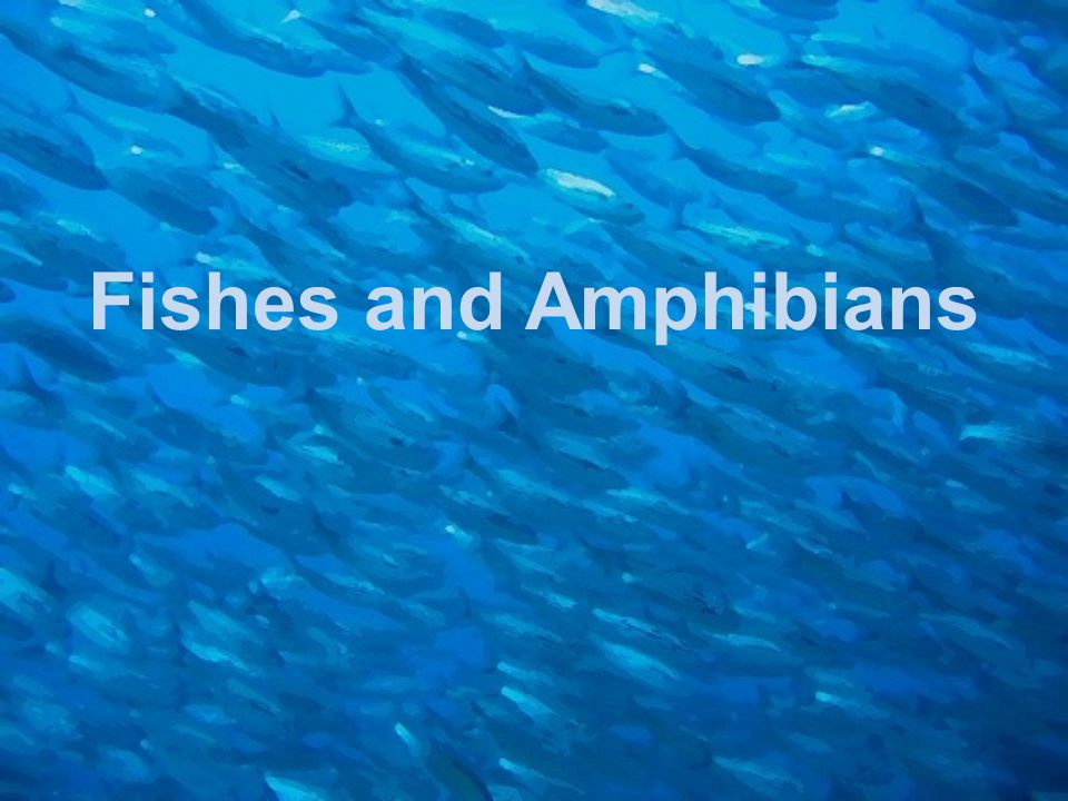 Modern Fishes The term fish refers to any member of one of three general categories of vertebrates: Agnatha (jawless fishes), Chondrichthyes (cartilaginous fishes), and Osteichthyes (bony fishes).