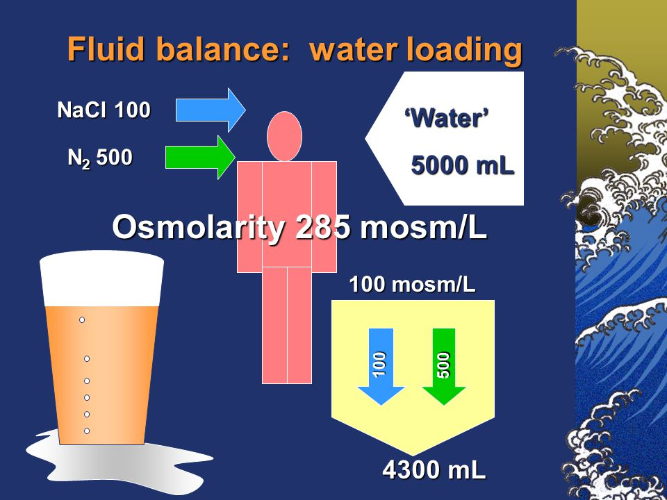 Fluid balance: water loading NaCl 100 N 2 500 'Water' 5000 mL 5000 mL 100 mosm/L Osmolarity 285 mosm/L 100 500 4300 mL