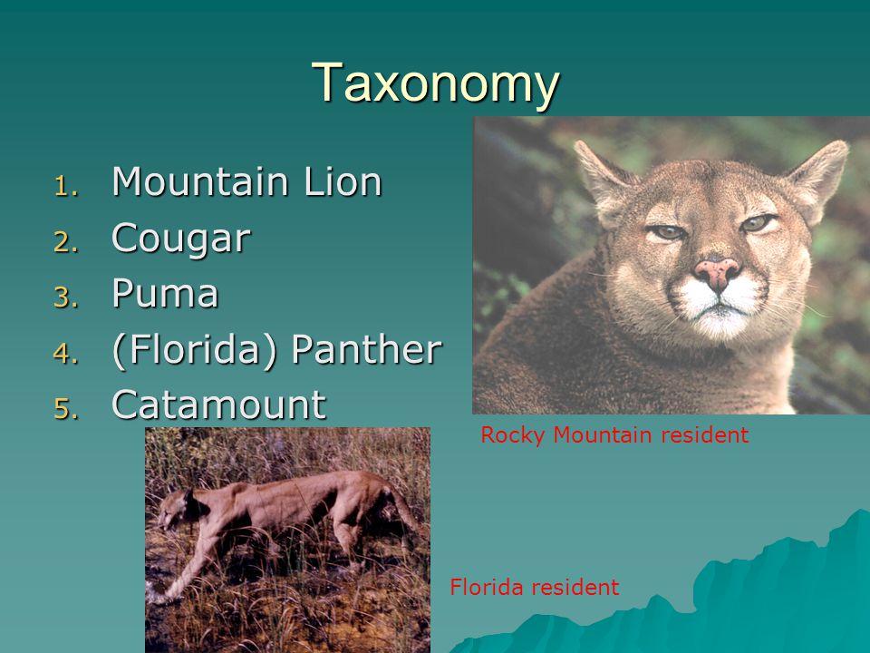 Taxonomy 1. Mountain Lion 2. Cougar 3. Puma 4. (Florida) Panther 5. Catamount Florida resident Rocky Mountain resident