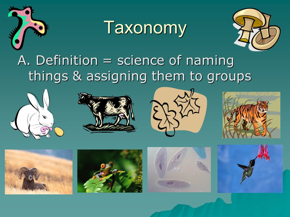 Taxonomy A. Definition = science of naming things & assigning them to groups