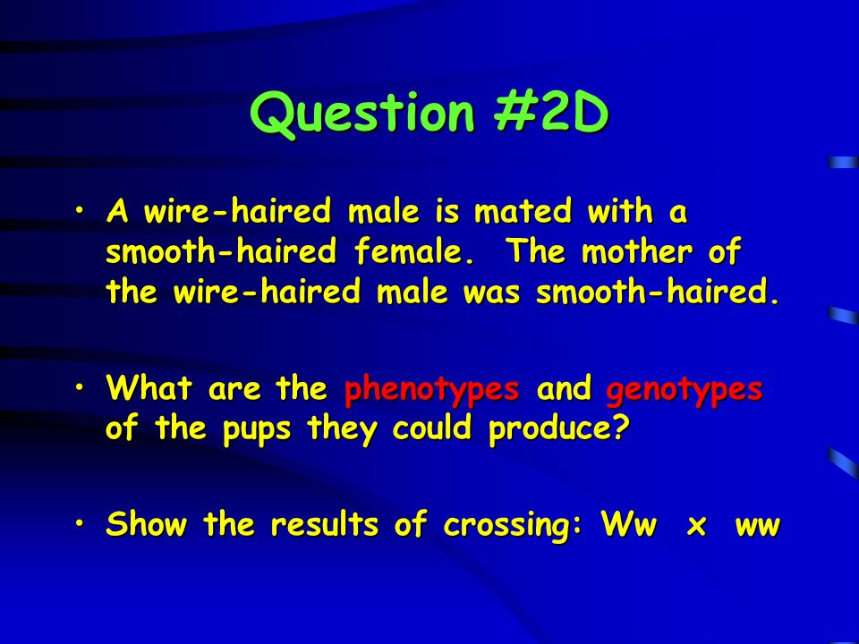 Question #2D A wire-haired male is mated with a smooth-haired female. The mother of the wire-haired male was smooth-haired.A wire-haired male is mated