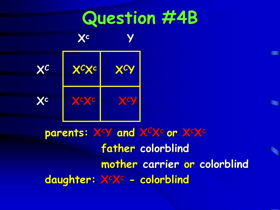 Question #4B X c Y X c Y X C X C X c X C Y X C X C X c X C Y X c X c X c X c Y X c X c X c X c Y parents: X c Y and X C X c or X c X c father colorbli