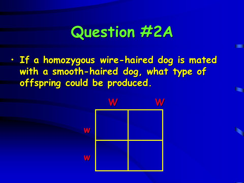 Question #3B What genotypes and phenotypes will be produced in the F 2 generation?What genotypes and phenotypes will be produced in the F 2 generation.