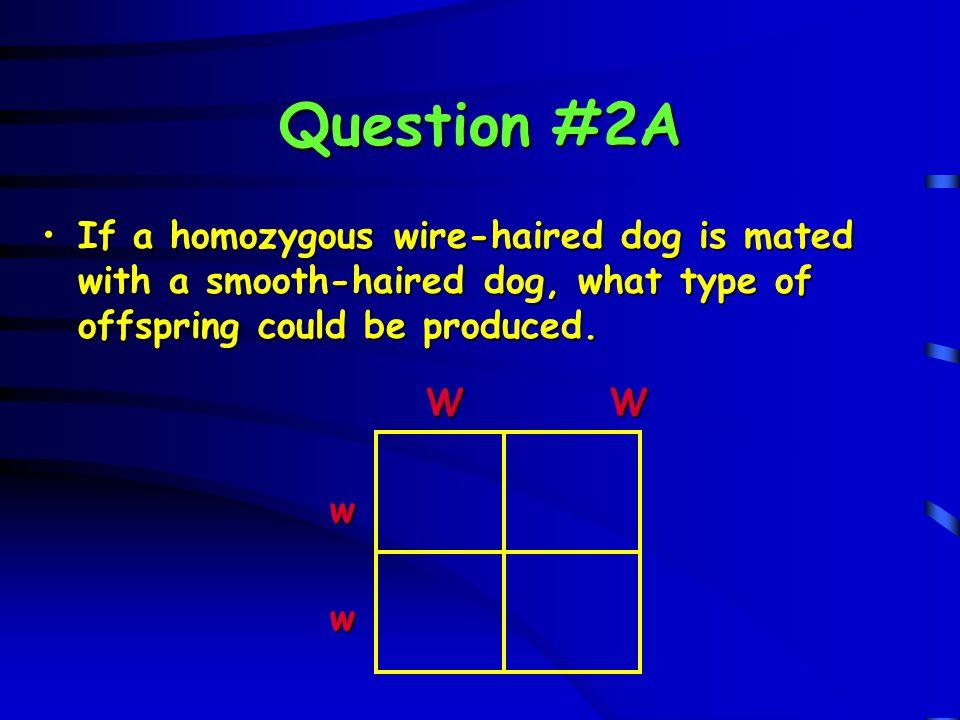Question #2A W W W W w Ww Ww w Ww Ww fg F 1 generation w Ww Ww all heterozygous w Ww Ww all heterozygous