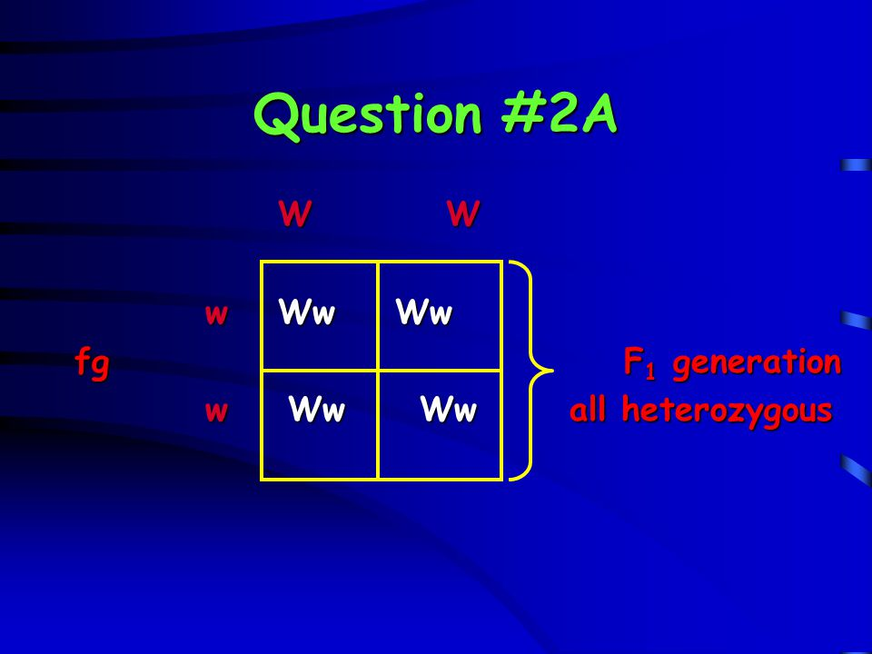Question #2B What type(s) of offspring could be produced in the F 2 generation?What type(s) of offspring could be produced in the F 2 generation.