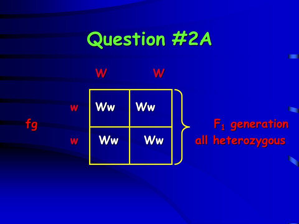 Question #3B R r R r R RR RrF 2 generation R RR RrF 2 generation r Rr rr r Rr rr phenotypes: 1:2:1 ratio genotypes: 1:2:1 ratio