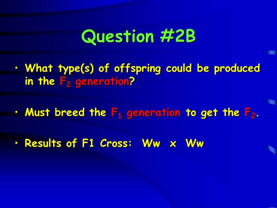 Question #2B W w W w W WW Ww F 2 generation W WW Ww F 2 generation w Ww ww w Ww ww genotype: 1:2:1 ratio phenotype: 3:1 ratio