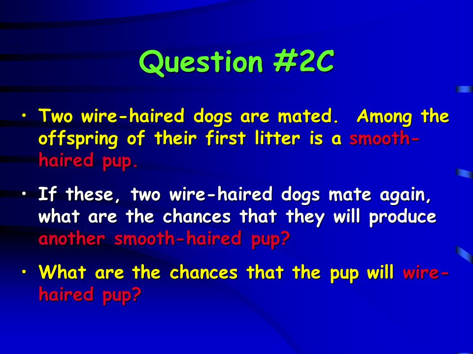 Question #2C W w W w W WW Ww F 2 generation W WW Ww F 2 generation w Ww ww w Ww ww - 1/4 or 25% chance for smooth-haired - 3/4 or 75% chance for wire-haired