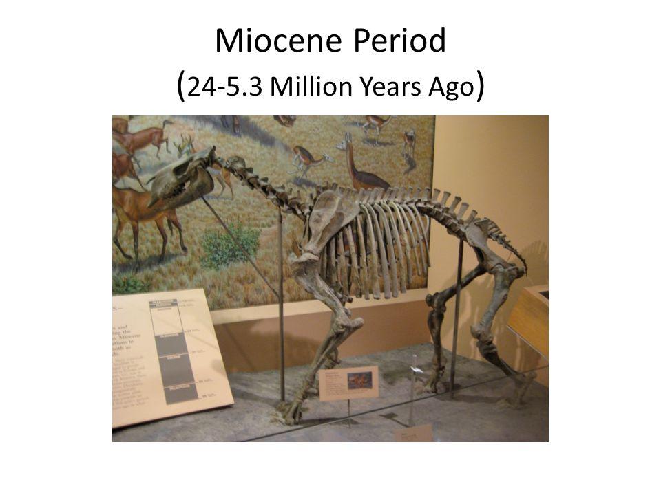 Miocene Period ( 24-5.3 Million Years Ago )