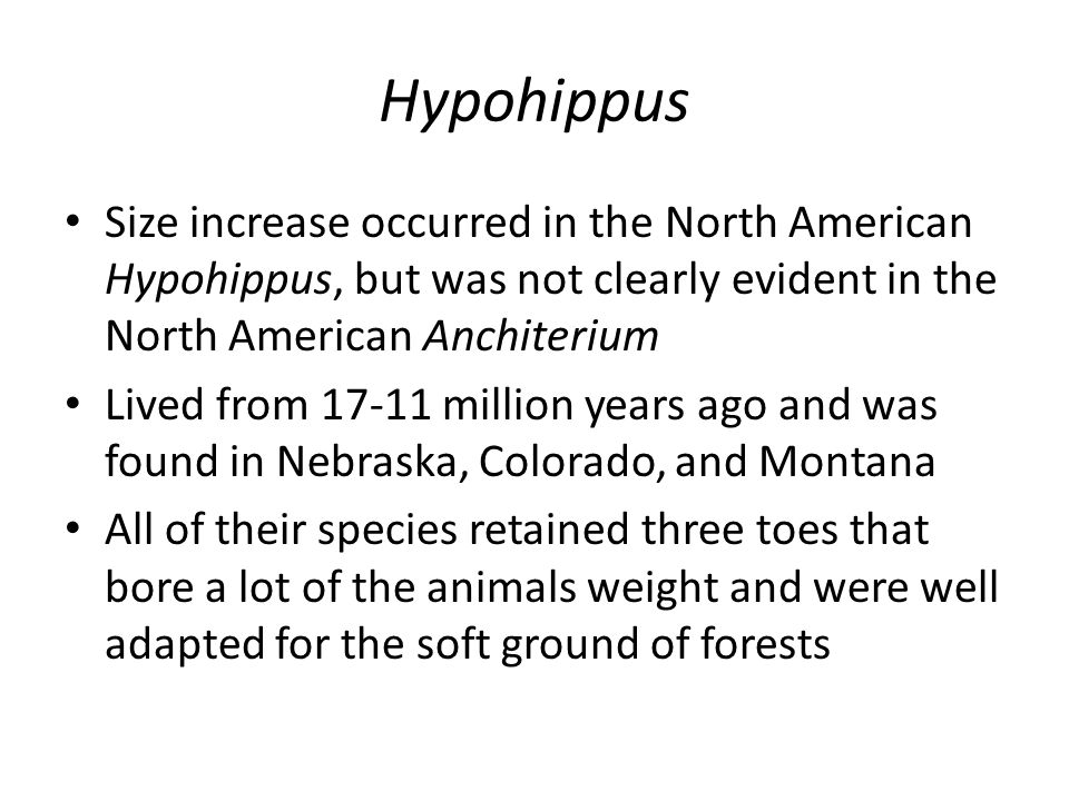 Hypohippus Size increase occurred in the North American Hypohippus, but was not clearly evident in the North American Anchiterium Lived from 17-11 million years ago and was found in Nebraska, Colorado, and Montana All of their species retained three toes that bore a lot of the animals weight and were well adapted for the soft ground of forests