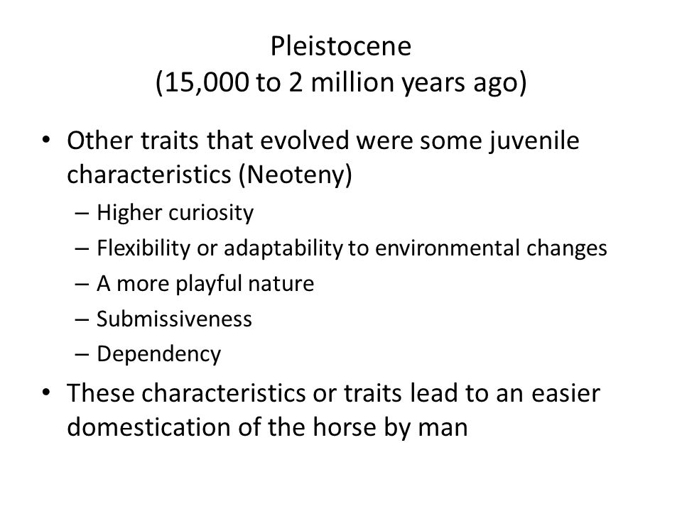 Pleistocene (15,000 to 2 million years ago) Other traits that evolved were some juvenile characteristics (Neoteny) – Higher curiosity – Flexibility or adaptability to environmental changes – A more playful nature – Submissiveness – Dependency These characteristics or traits lead to an easier domestication of the horse by man