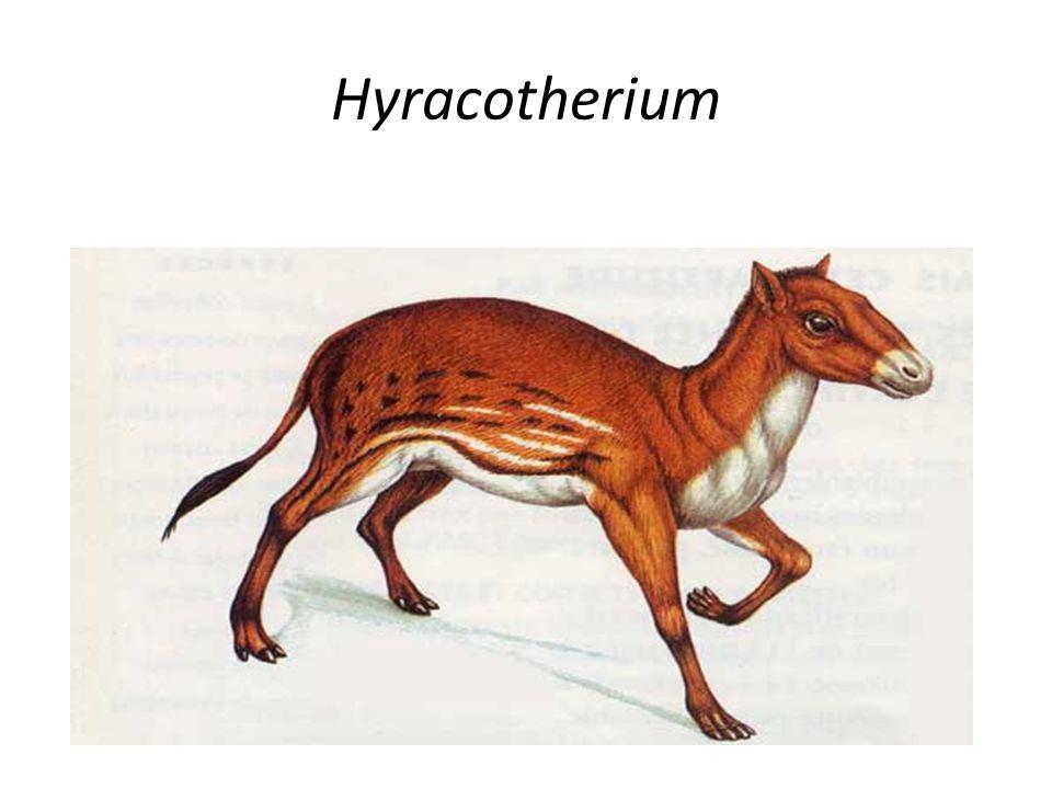 Hyracotherium