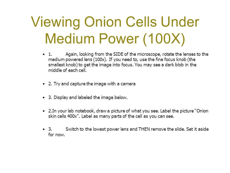 Viewing Onion Cells Under Medium Power (100X) 1.Again, looking from the SIDE of the microscope, rotate the lenses to the medium powered lens (100x). I